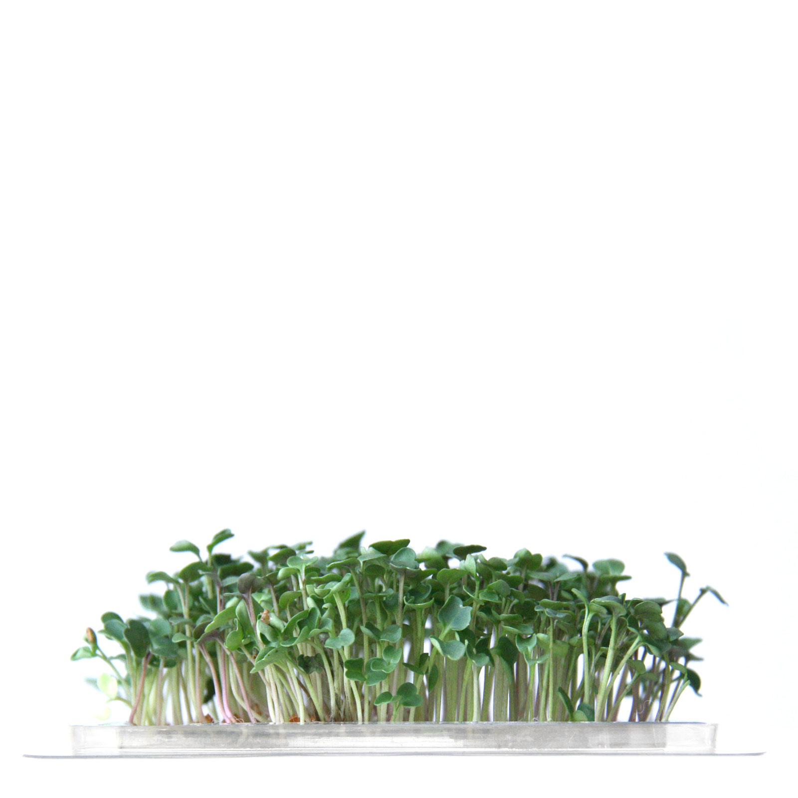 InstaGreen Microgreen cup with Rucula