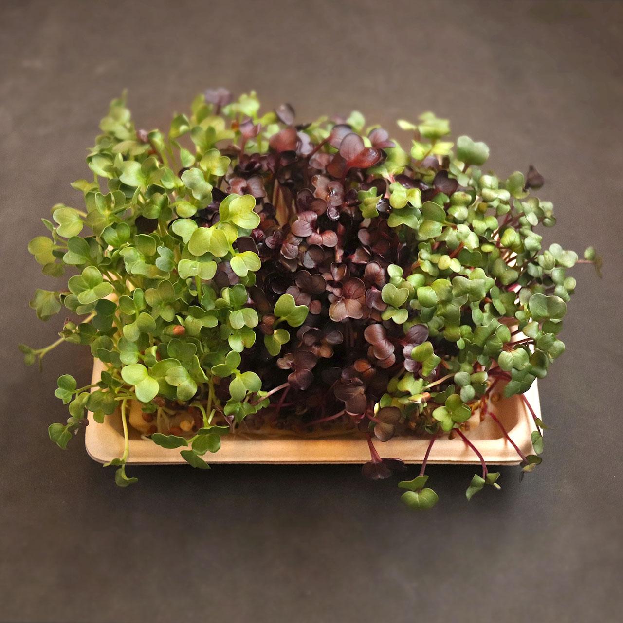 Home grow kit - fully grown microgreens