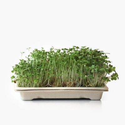 Home grow kit with spicy microgreens - rucula, gardencress, mustard