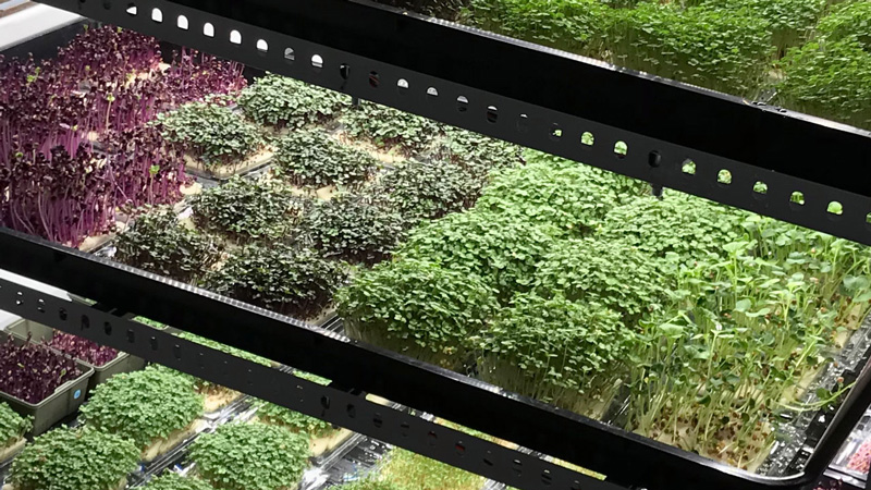 Closeup of instagreen cultivation system in the vertical indoor urban farm in Barcelona