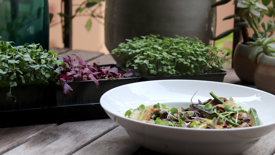 Grow microgreens at home and create wonderful dishes